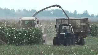 Download Уборка кукурузы на силос 21.09.2018 Video