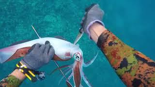 Download Spearfishing video Episode 5 by Salman Alblawi Video