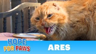 Download A cat with no ears, no teeth and no home needs your help. Video