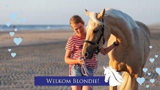 Download De nieuwe pony Blondie, de eerste maand * Hart voor Paarden * Video