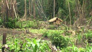 Download Karen internally displaced people face food scarcity Video