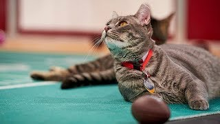 Download Cat-lete of the Week - Banjo Fiddle and Mandy Lynn - Episode 8 - Hallmark Channel Video