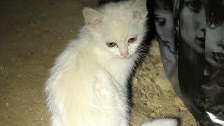 Download White kittens in the black basement Video