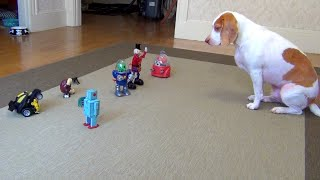Download Dog vs. Robot Army: Cute Dog Maymo Video