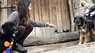 Download Woman Keeps Trying To Rescue Dogs Chained Up Outside | The Dodo Video