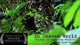 Download Amazon Rainforest Wildlife (United Nations Award Winner) - by Paul Rosolie Video
