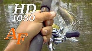 Download Wild Sarratoga Fishing Andysfishing Fishing Video Big Fish EP.193 Video