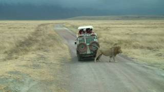 Download Safari dans le cratère du Ngorongoro, Tanzanie Video