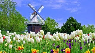 Download Dutch Countryside Video