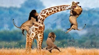 Download LIVE: AMAZING Moments Of Animal Fight Battle - Discovery Wild Animal Planet 2018 Video