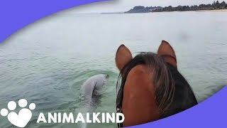 Download Horse's favorite pastime is playing with dolphins Video