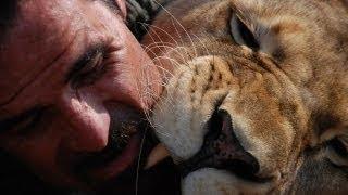 Download Kevin et les lions 2/2 Video