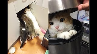 Download とんでもない所にいるかわいい猫ちゃんが面白い件w~Outrageous cute cats that are in place. Video
