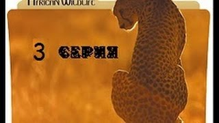 Download Удивительная природа Африки 3 серия Video