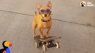 Download Dog Loves To Go To The Skate Park With His Dad | The Dodo Video