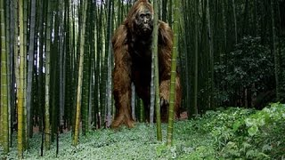 Download The Largest Ape that Ever Lived Documentary Video