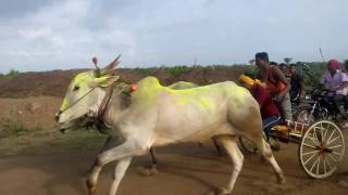 Download Bail gadi race Video
