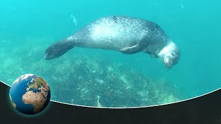 Download Amazing nature: Natural swimmer Video