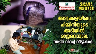 Download King cobra found under chimney in the kitchen, natives become frightened | Snakemaster EP 446 Video
