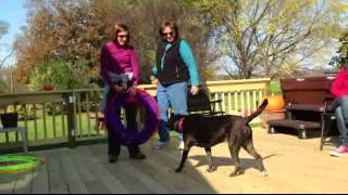 Download Animal Assisted Play Therapy: Sample Role-Play with an Anxious Child (structured activity) Video