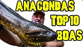 Download TOP 10 Anacondas & Boas in Our Reptile Room Video