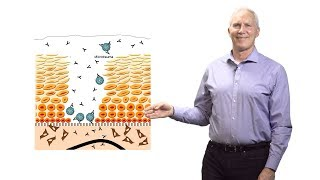 Download John Schiller (NCI at NIH) 2: Why Do HPV Virus-Like Particle Vaccines Work So Well? Video