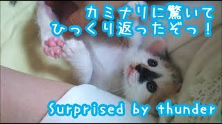 Download 子猫。生まれて初めての雷に驚く!Cats are surprised by thunder Video