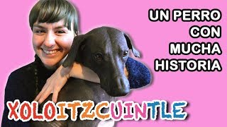 Download Xoloitzcuintle: un chien mexicain historique /Perro mexicano con mucha historia Video