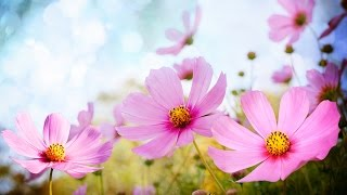 Download Morning Relaxing Music - Happy and Positive Energy (Diana) Video