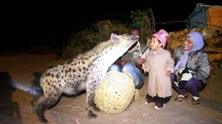 Download Hyena feeding in Ethiopia becomes tourist attraction Video