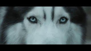 Download Hardwell feat. Jonathan Mendelsohn - Echo Video