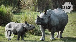 Download Tracking Down Rhino Poachers in India   The Daily 360   The New York Times Video