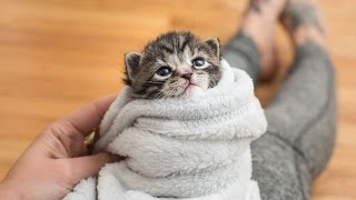 Download 5 Ways to Comfort a Kitten Video