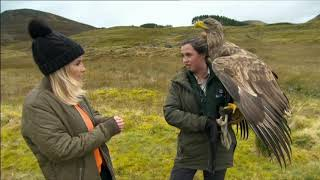 Download The Golden Eagle. Scotland. BBC Countryfile Video
