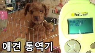 Download 강아지가 짖는 소리를 사람이 알아듣는다고??(애견 통역기 바우링걸) - 쏫 (Dog Translator, Bowlingual - SSOT) Video