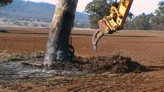 Download Excavator Removing Gum Tree Video
