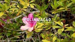 Download 04 - Maio | Polinização Video