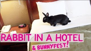 Download RABBIT STAYS IN A HOTEL & BUNNYFEST! Video