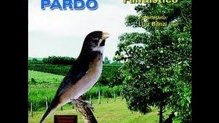 Download Canto Tui Tui mais bonito de Coleiro (COM CHAMADO DE FÊMEA) Video
