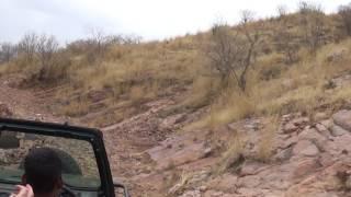 Download Safari at zone 7 Ranthambore Video