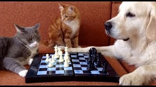 Download The FUNNIEST ANIMAL COMPILATION ever made🔶 Video