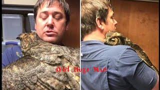 Download Owl Missed The Man Who Saved Her So Much She Couldn't Stop Hugging Him (Captioned With Update) Video
