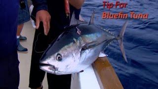 Download Bluefin Tuna Fishing Tip | SPORT FISHING Video