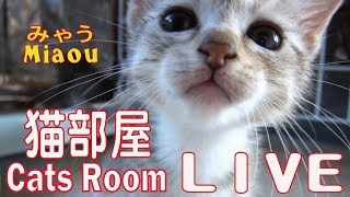 Download 猫部屋タワー【猫部屋ライブ みゃう】Cat Tower [Cats room Miaou] Video