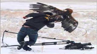 Download Top 7 Best Eagle Attacks (GRIZZLY,KANGAROO...& MAN) HD Video