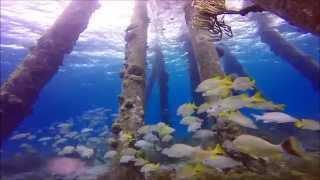 Download Scuba Diving Bonaire: Salt Pier and Oil Slick Leap Video