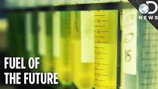 Download We Can Power The World With Algae! Video