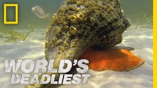 Download Hermit Crab vs. Conch | World's Deadliest Video