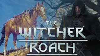 Download Why Geralt Calls All Of His Horses Roach - Witcher Lore - Witcher Mythology - Witcher 3 lore Video
