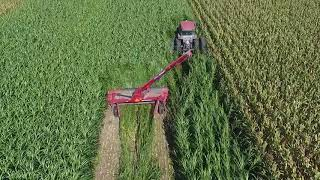 Download 316 disc mower cutting some tall haygrazer!!! Video